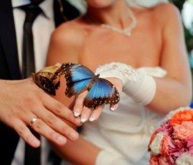 chuva borboletas